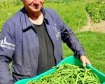 ekologiczna-uprawa-warzyw